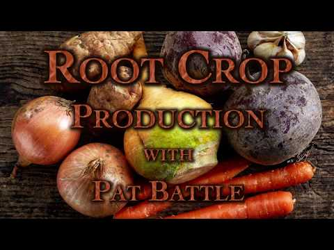 Root Crop Production with Pat Battle
