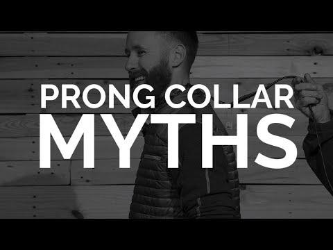 Debunking Prong Collar MYTHS
