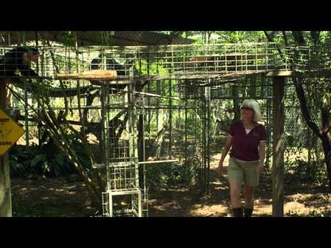 ALMOST WILD: Jungle Friends Primate Sanctuary