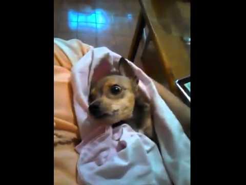 Dog Eats Like A Person