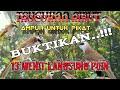 Suara Trucukan Ribut Trucukan Ribut Kombinasi Burcil  Mp3 - Mp4 Download