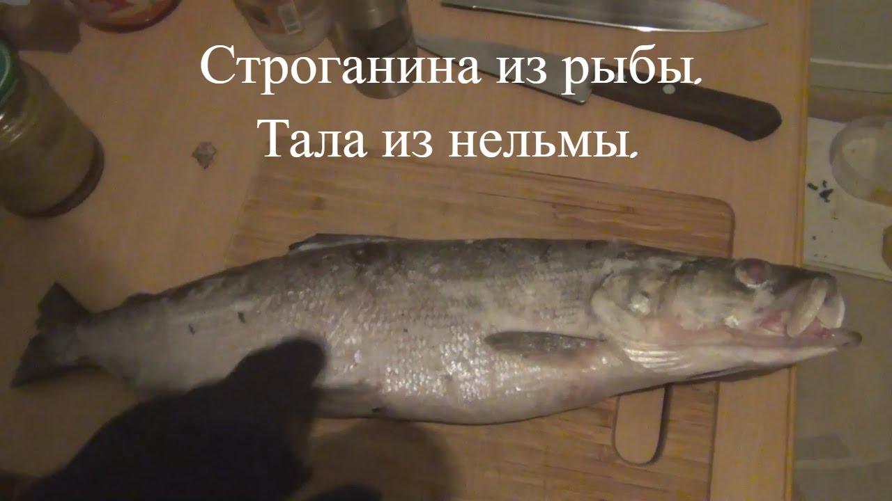 Ресторан «рыбный базар» приглашает гостей насладиться стерлядью по. Ждет особый сюрприз фиксированная цена моллюска – 350 руб за штуку. Уже на протяжении 14 лет мы радуем вас свежей рыбой, устрицами и.