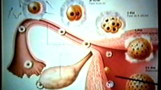 Dr Eduardo Kremenchutzky - Embriología humana
