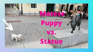 Maltese puppy reaction on the statue