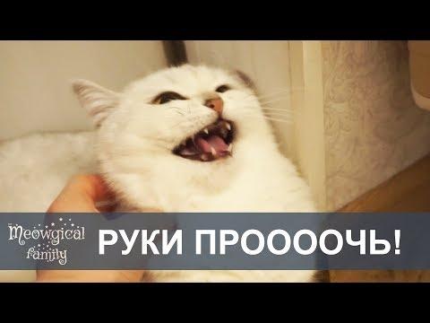 Вопрос: Можно пугливую кошку перевоспитать Как?