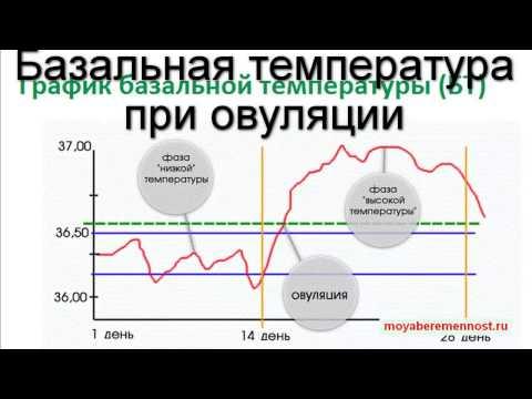 Базальная температура при овуляции