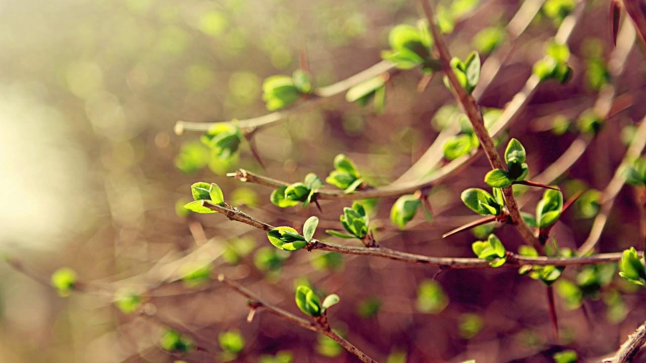 Скачать звуки весны слушать