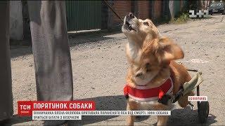 Історія собаки, яка вчиться бігати на двох лапах після жорстокого нападу