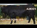 Глава КФХ Александр Москвин на выставке Золотая Осень-2016