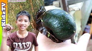 หอยยักษ์-ปีนต้นไม้-พี่แชมป์น้องปาน-happykidztv
