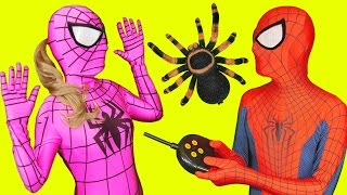 Pink Spidergirl Spider Prank with Spiderman in Real Life Fun(Spiderman prank spidergirl with the remote control spider, mouse and shark. Subscribe: https://www.youtube.com/channel/UCYDzzN1PqSfckzRTwNeC7eQ My ..., 2016-03-06T16:00:01.000Z)