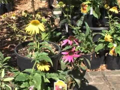 als garden center bauman farm gardenpalooza - Als Garden Center