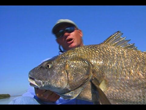 Canoe fishing for big black drum in the no motor zone for How to cook drum fish