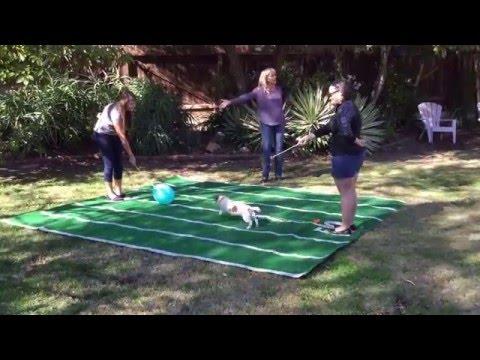 Balloon popping dog Anastasia, predicts super bowl 50, 2016