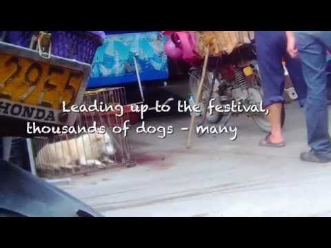 The Yulin Dog Meat Festival Must Never Happen Again