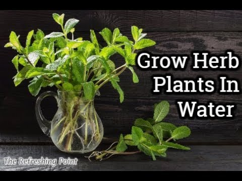 how-to-grow-herb-plants-in-water-all-year-long---save-money-and-have-an-endless-supply