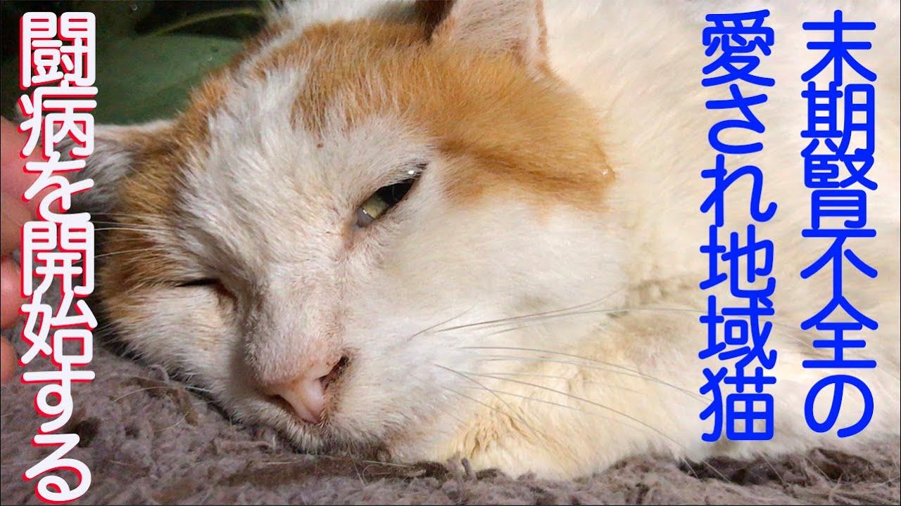 不全 猫 末期 症状 腎