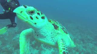 Hungry Turtle Tried To Eat My Gopro