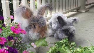 World's Cutest Rabbit Gets An Adorable New Girlfriend