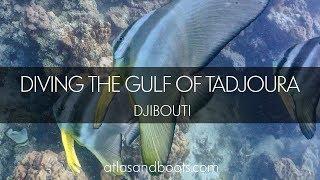 видео Отдых в Джибути 2018