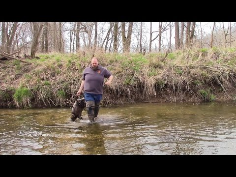 beaver trapping for beginners | Beaver Bandit