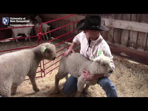 4-H Animal Science Field Day | May 22, 2016