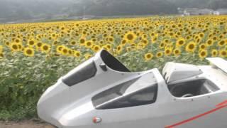 栃木県の益子のひまわりオミクロンサイドカーで行くひまわり.