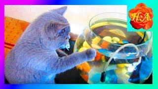 Кот рыболов Как Шерлок ловит рыбу Смешные животные🐱🐟🐈