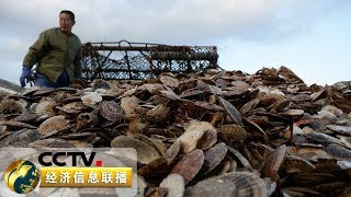 《经济信息联播》 20191124| CCTV财经