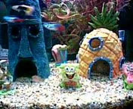 Spongebob squarepants tank youtube for Spongebob fish tank