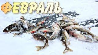 Какая рыба ловится в феврале Как ловить рыбу в феврале СекРеты рыбалки в феврале
