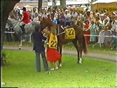 KOTARE CHIEF (NZ) 1987 Auckland Cup