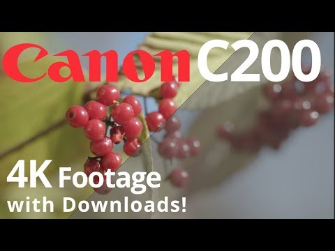 Canon C200 Raw Footage Workflow + Free Samples for Download | 4K