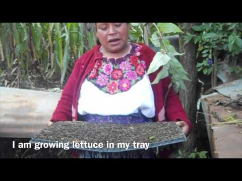 Organic Gardens in Guatemala, Kateri Fund.
