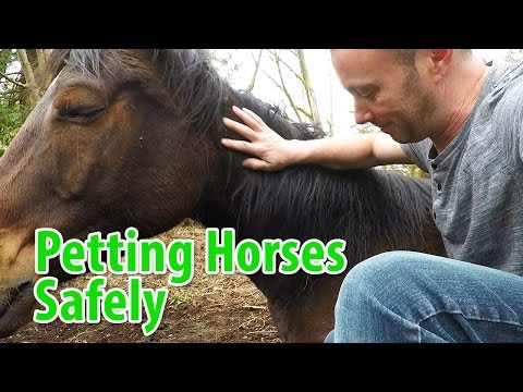 Safety Around Horses: Safe Ways To Pet Horses And Reading Horse Behaviors