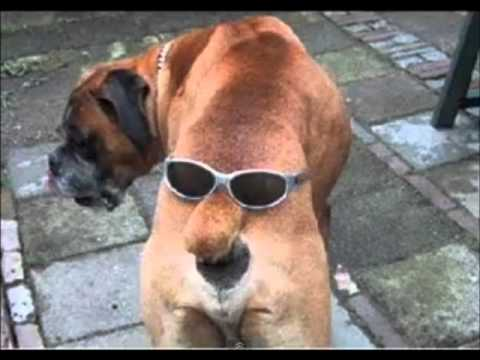 Really Funny Dogs The Coolest Dog Photos Ever