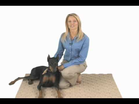 deramaxx-relieves-your-dog's-joint-and-arthritis-pain