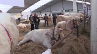 SALON DU CHAROLAIS - Édition 2016 - Avallon (89)
