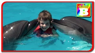 Egypt ziua 5.  Inotam cu delfinii  Bogdan`s Show si Sofia. Ghid de calatorie.