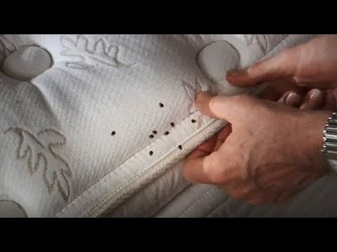 How To Get Rid of Bed Bugs - Ace Hardware