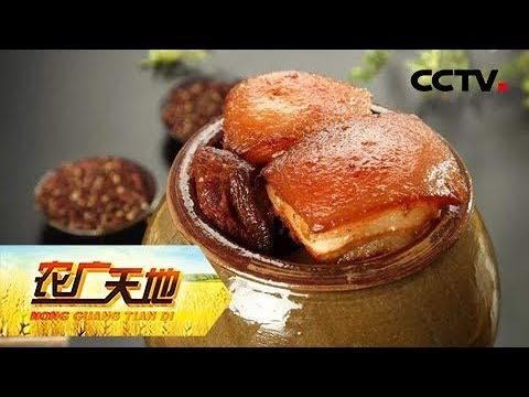 《农广天地》椒麻猪壮正当时 20190214 | CCTV农业