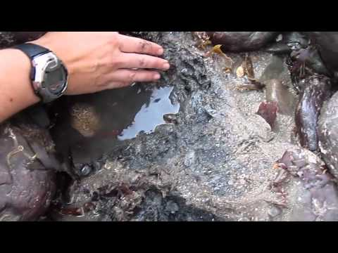 Rock pooling with a marine biologist