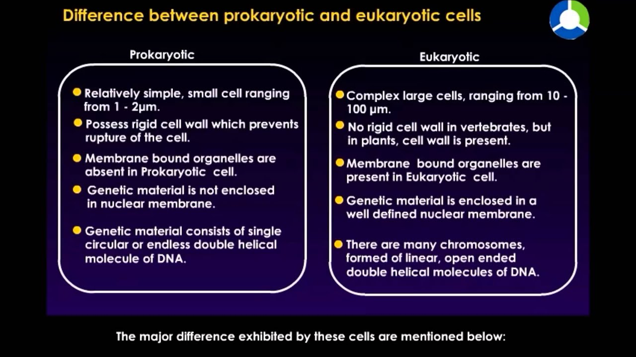 comparison of prokaryotic and eukaryotic cells essay