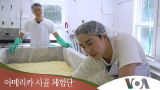 [아메리카 시골 체험단] 200년 된 치즈공장에 가다