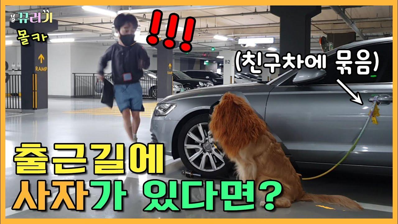 Download (IDN / ENG SUB) (몰카) 출근길 내 차 앞에 사자가 있다면? ㅋㅋㅋㅋㅋㅋ