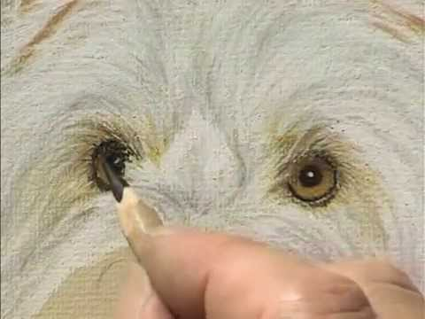 preview draw paint dogs with pastel pencils with colin bradley