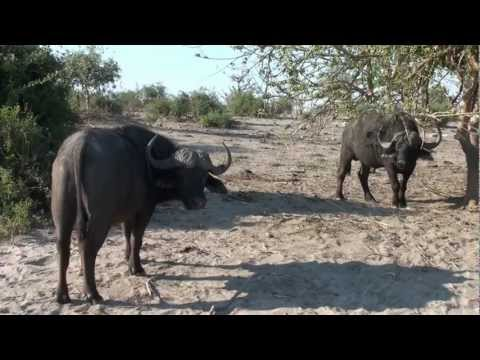 201110 Botswana Northern Territory & Victoria Falls