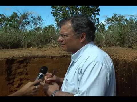 Cultivo de grãos no estado do Amapá