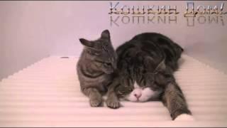 Коты-Чудаки дурачатся! Юмор!