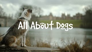 All About Dogs | Paws at the Palace